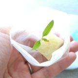 室内で「ミニトマト」を水耕栽培!種まき~収穫まで(随時更新)